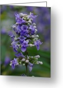 Fine Art Flower Photography Greeting Cards - Purple Flower Greeting Card by Juergen Roth