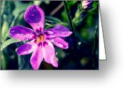 Green Day Pyrography Greeting Cards - Purple Flower Greeting Card by Magdalena Sienkiewicz