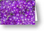 Pinkish Greeting Cards - Purple Flowers Greeting Card by Frank Tschakert