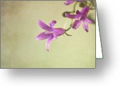 Stamen Greeting Cards - Purple Flowers Greeting Card by Photo - Lyn Randle
