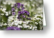 Reno Gregory Greeting Cards - Purple Flowers Greeting Card by Reno Gregory