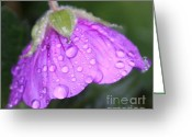Floral Greeting Cards - Purple Geranium Detail Greeting Card by Lynn-Marie Gildersleeve
