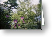 Floral Greeting Cards - Purple Geraniums Dream Greeting Card by Lynn-Marie Gildersleeve