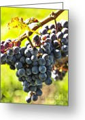 Vine Photo Greeting Cards - Purple grapes Greeting Card by Elena Elisseeva
