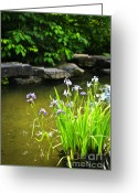 Backyard Greeting Cards - Purple irises in pond Greeting Card by Elena Elisseeva