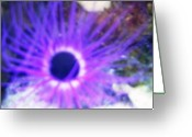 Sea Life Digital Art Greeting Cards - Purple Jellyfish Greeting Card by Linnea Tober