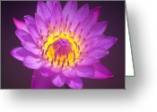 Claire Copley Greeting Cards - Purple Lotus Flower Greeting Card by Pixie Copley