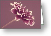 Purple Greeting Cards - Purple Mum Greeting Card by Cathie Tyler