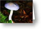 Forest Floor Photo Greeting Cards - Purple Mushroom Russula Cyanoxantha Greeting Card by Andrew Pacheco
