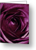 Floral  Greeting Cards - Purple Passion Greeting Card by Cathie Tyler
