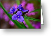 Marty Koch Greeting Cards - Purple Passion Greeting Card by Marty Koch