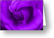 Robyn Stacey Photo Greeting Cards - Purple Rose Greeting Card by Robyn Stacey