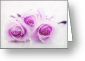 Purple Flowers Greeting Cards - Purple roses Greeting Card by Kristin Kreet