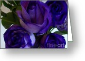 Wrap...floral Greeting Cards - Purple Roses ll Greeting Card by Marsha Heiken