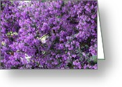 Purples Greeting Cards - Purple Screen Greeting Card by Carol Groenen