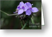 Florida Flowers Greeting Cards - Purple Spiderwort Flowers Greeting Card by Sabrina L Ryan