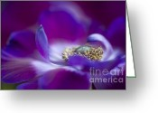Caen Greeting Cards - Purple Spring Greeting Card by Jacky Parker