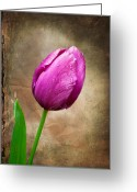 Texture Flower Photo Greeting Cards - Purple Tulip Greeting Card by Fred LeBlanc
