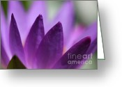 Florida Flowers Greeting Cards - Purple Water Lily Abstract Greeting Card by Sabrina L Ryan