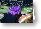 Lily Pad Greeting Cards Greeting Cards - Purple Water Lily In Water Greeting Card by Chad and Stacey Hall