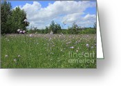 Canada Greeting Cards - Purple WIldflowers Greeting Card by Jim Sauchyn
