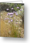 Grass Pastels Greeting Cards - Purple wildflowers Greeting Card by Robert Ball