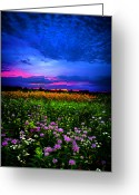Natural Light Greeting Cards - Purples Greeting Card by Phil Koch