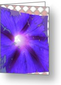 Warm Looking Flower Greeting Cards - Purplewave Greeting Card by Debra     Vatalaro
