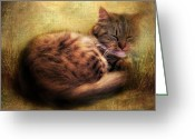 Paws Digital Art Greeting Cards - Purrfectly Content Greeting Card by Jessica Jenney