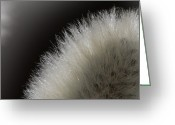 Pussy Willow Branches Greeting Cards - Pussy Willow Greeting Card by Michel Soucy