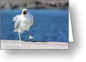 Seagull Photo Greeting Cards - Putting His Foot Down Greeting Card by Kristin Elmquist