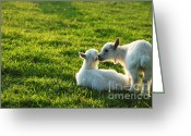 Kid Photo Greeting Cards - Pygmy Goat Kid Twins Greeting Card by Thomas R Fletcher