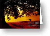 Graze Photo Greeting Cards - Pygmy in Morning Light Greeting Card by Thomas R Fletcher