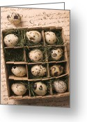 Quail Greeting Cards - Quail Eggs In Box Greeting Card by Garry Gay