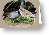 Quail Greeting Cards - Quail Mates Greeting Card by Will Borden