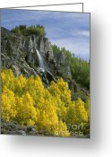 Photos Of Autumn Greeting Cards - Quaking Aspen Waterfall - Eastern Sierra Greeting Card by Craig Lovell