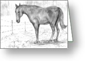 "\\\""barbed Wire Fence\\\\\\\"" Drawings Greeting Cards - Quarter Horse Greeting Card by Barney Hedrick"