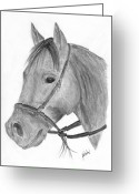 Western Pencil Drawings Greeting Cards - Quarter Horse Greeting Card by Gunilla Wachtel