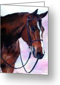 Bay Horse Greeting Card Greeting Cards - Quarter Horse Hunter Under Saddle Portrait Greeting Card by Olde Time  Mercantile