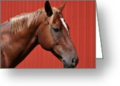 Quarter Horse Photo Greeting Cards - Quarter Horse II Greeting Card by Sandy Keeton