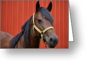 Quarter Horses Greeting Cards - Quarter Horse Greeting Card by Sandy Keeton