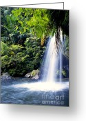 Lush Vegetation Greeting Cards - Quebrada Juan Diego Waterfall Greeting Card by Thomas R Fletcher