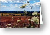 Artography Greeting Cards - Queen Annes Lace and Hay Bales Greeting Card by Julie Dant