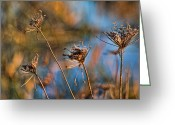 Sage Green Greeting Cards - Queen Annes Lace Greeting Card by Bonnie Bruno