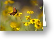 Texas Wildflowers Greeting Cards - Queen Butterfly On Coreopsis  Greeting Card by Mark Weaver