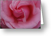 Robyn Stacey Photo Greeting Cards - Queen Elizabeth Pink Rose Greeting Card by Robyn Stacey