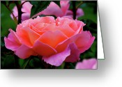 Pink Flower Prints Greeting Cards - Queen Marys Roses Greeting Card by Rona Black