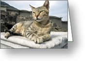 Paws Digital Art Greeting Cards - Queen of Ephesus Greeting Card by Glennis Siverson