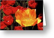 Flower Blossom Greeting Cards - QueensCourt Greeting Card by Robert Trauth