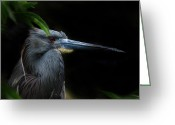 Wildlife Photos Greeting Cards - Quietly Alert Greeting Card by Skip Willits